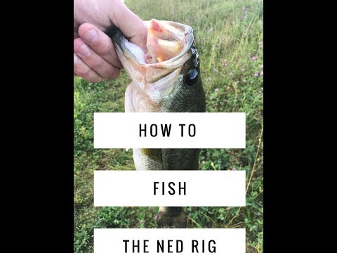 How To Fish The Ned Rig