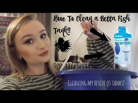 HOW TO CLEAN A BETTA TANK! | WHAT YOU WILL NEED & TUTORIAL | ItsAnnaLouise