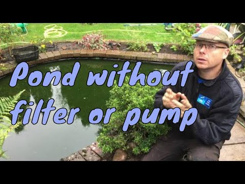 Do I need a filter on my fish pond? | Any Pond Limited | UK