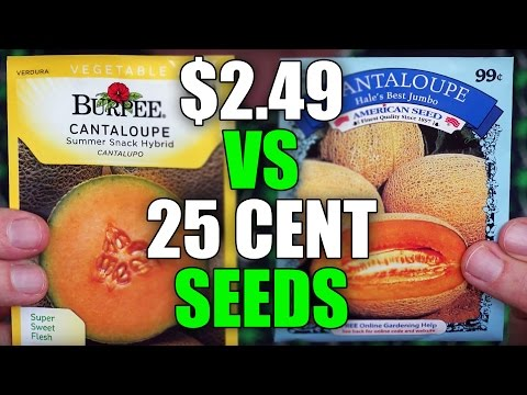 Dollar Store Seeds vs Burpee Seeds | EpicReviewGuys CC