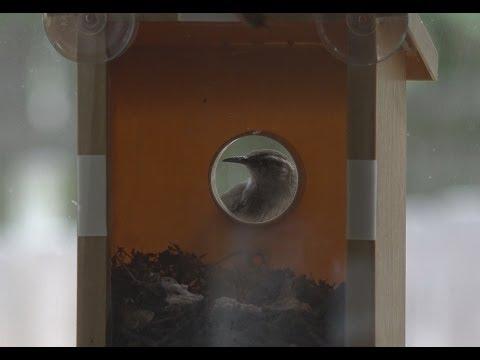 My Spy Birdhouse Update- Birds Move In   EpicReviewGuys in 4k CC