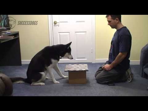 How To Teach A Dog To Play Chess