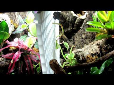 Quick Crested Gecko Vivarium Care
