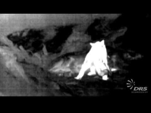 Mountain Lion - DRS Tamarisk320