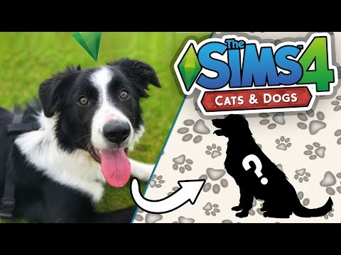 THE SIMS CATS & DOGS! Ep.1 Making My Pets!