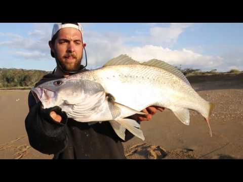 Fishing for Mulloway land based | Westin Hypo Teez soft plastic lure