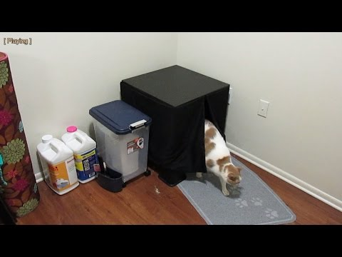 Make cat furniture litter box using IKEA Lack table in 5 minutes for $16-21