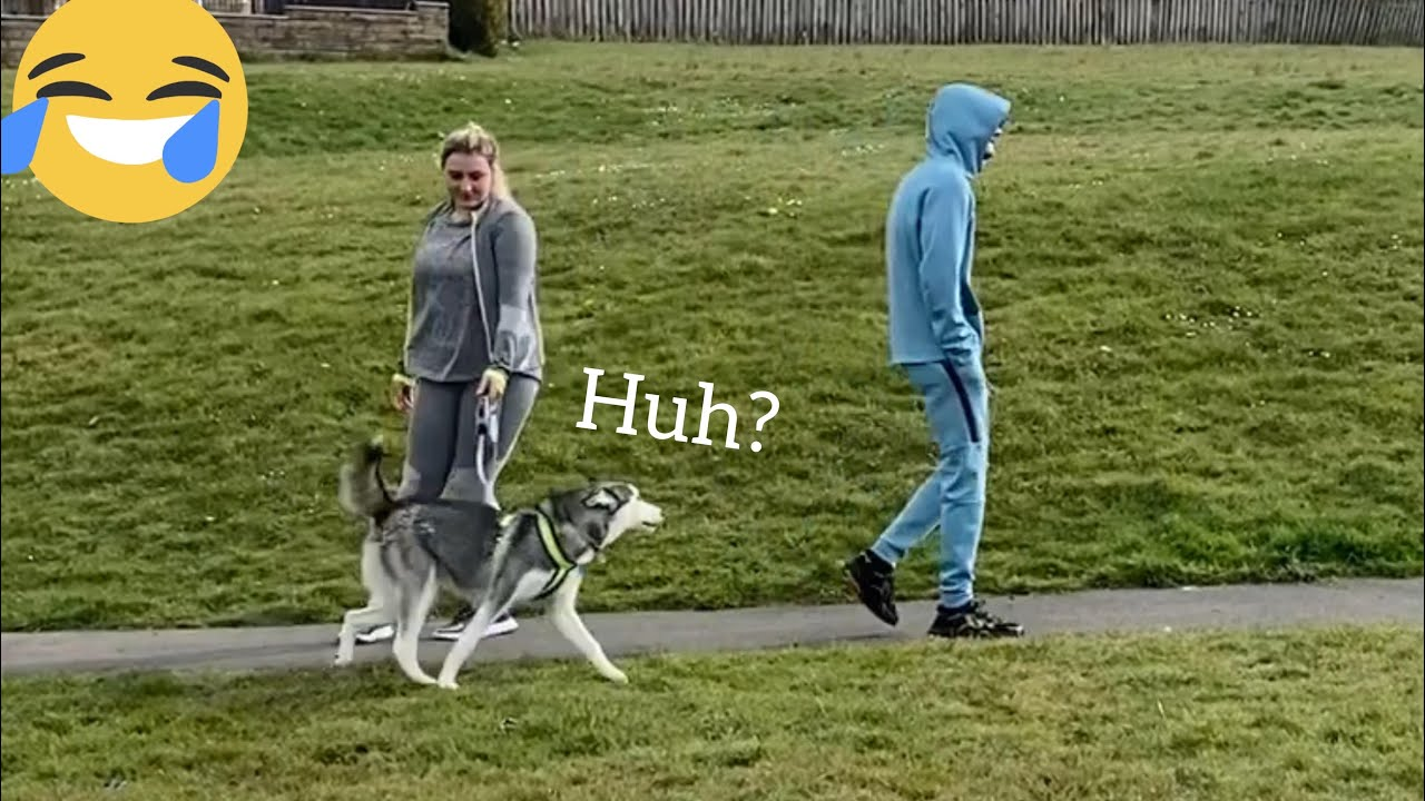 Will My Huskies Recognise Me In Public In Disguise Prank! [Male v Female v Puppy!]