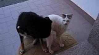 Dog & Cat in Love