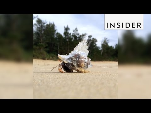 Artist designs hermit crab shells shaped like castles and buildings