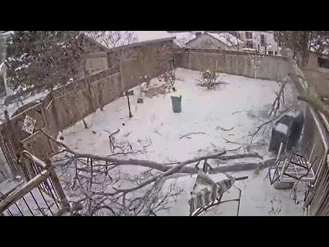 Dog narrowly escapes falling tree in backyard during ice storm (WOW)