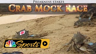Crabs predict the 2018 Preakness Stakes winner I NBC Sports