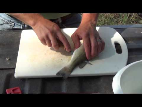 How to Fillet Fish: Largemouth Bass