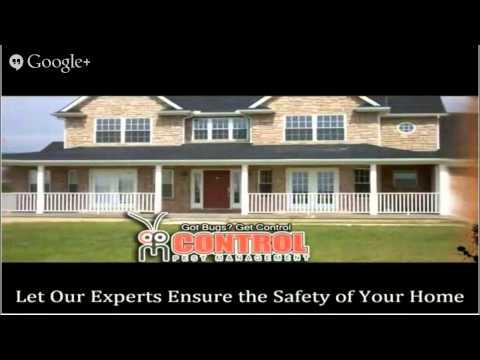 pharaohants Orlando  Control Pest Management  Toll-Free 888-961-PEST