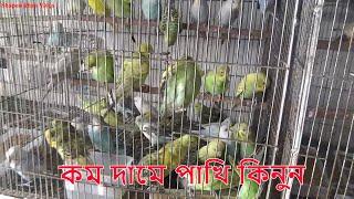 Parrot Bird  Shop In BD / Buy Birds Cheaper In Dhaka / Shapon Khan Vlog