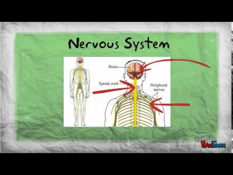 Human Body Systems Introduction