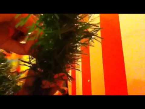 How to fix broken Christmas lights