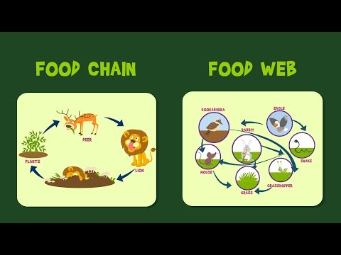 Food Chain | Food Web | Video for Kids