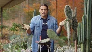 Características del cactus opuntia - Bricomanía