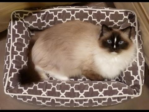 Designer Cat Bed: Ragdoll Cats Receive Bowsers Pet Bed Urban Lounger for Product Review - Floppycats