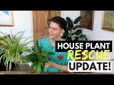 HOW TO REVIVE DYING HOUSE PLANTS UPDATE | HOUSE PLANT RESCUE MAY 2018