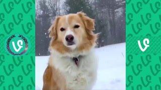 Ultimate Animal Vines Compilation 2016 - Funny Animals Vine Videos