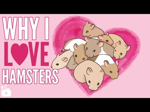 WHY I LOVE HAMSTERS (animation)