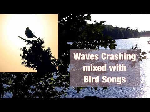 Waves Crashing mixed with Bird Songs in the Background