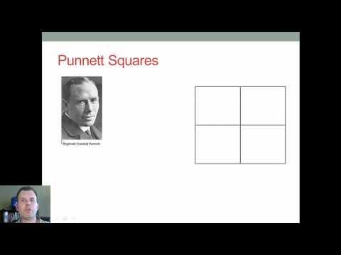 How to Build Monohybrid Punnett Squares