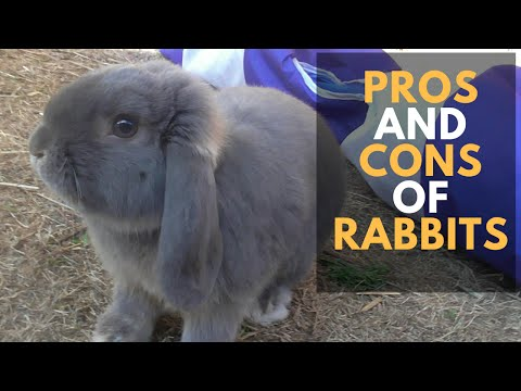pros and cons of keeping a rabbit in your room.