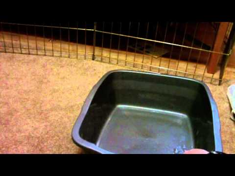 How to clean a rabbit litter box (Part 1)