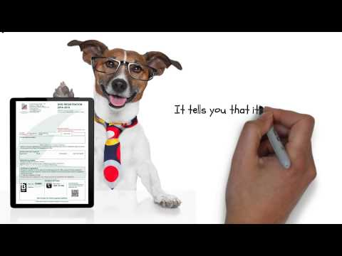 Dog Registration: How to keep your dogs happy!