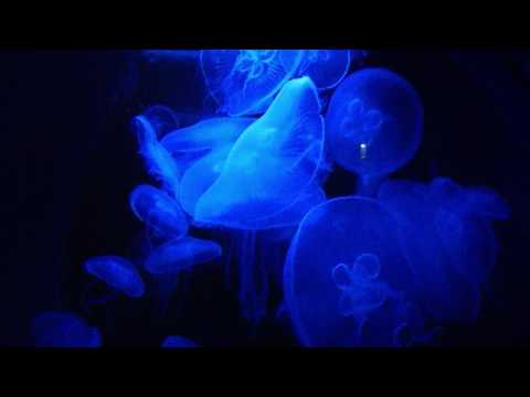 How some Jellyfish looks like at night