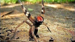 17 DEADLIEST Animals in the Amazon
