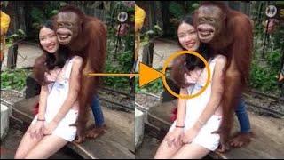 CRAZY Animal Videos | Animal Fails Compilation (2020)