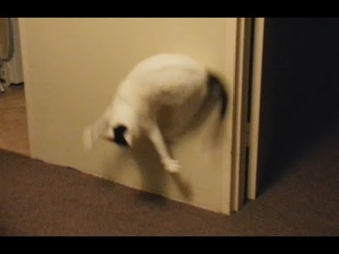The greatest cat video I may ever make (backflips)
