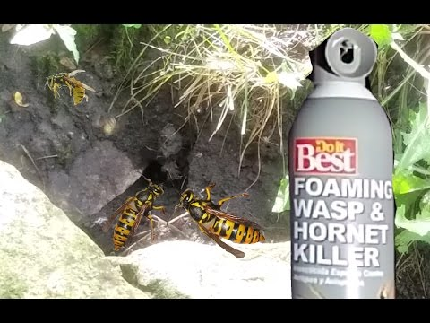 How To KILL a Ground Wasp or Yellow Jacket Nest. EASY WAY