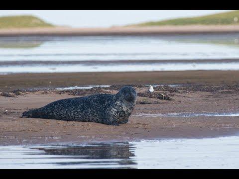 Iles-de-la-Madeleine 2017 - Seal watching