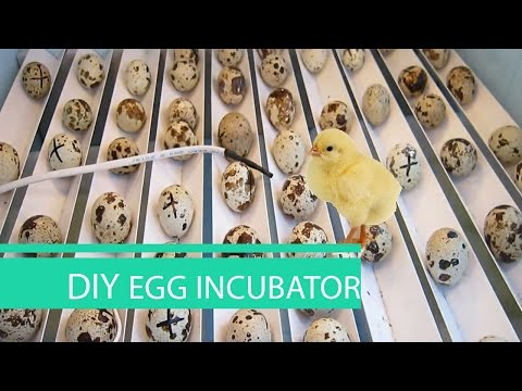 How to make an EGG INCUBATOR at home // HomeCraft