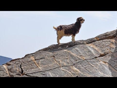 Oman - Hadjar Mountains - Góry Skaliste