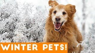 Funniest Winter Pet Video Compilation December 2017 | Funny Pet Videos