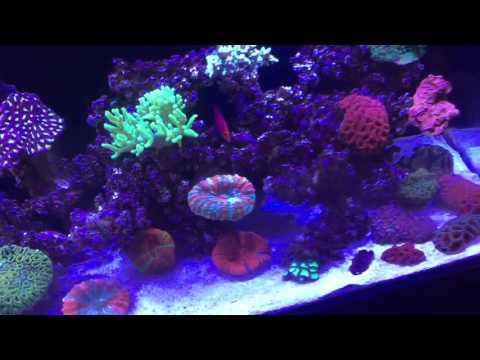 How to rid Light brown algae -diatom