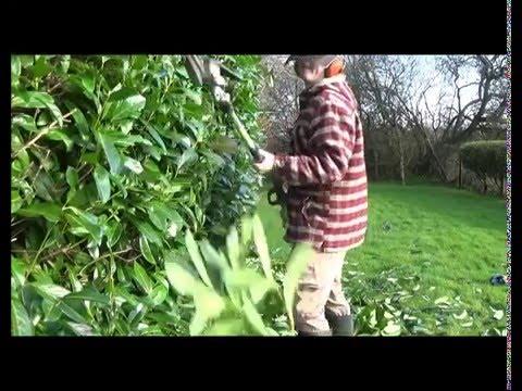 February Hedge Cutting