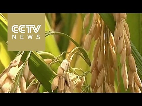 Sneak peek: secret found to increasing crop yield