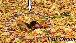 MILLION PITY ! Baby Monkey Cody Fall Down From High Tree While Mom Is Fighting With Kidnapper