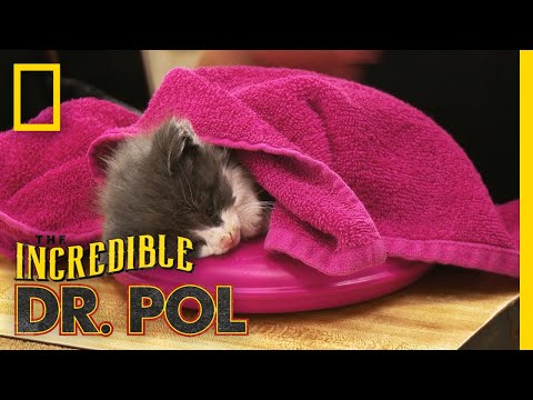 Helping a Sick Kitten | The Incredible Dr. Pol