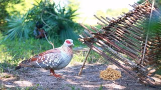 The First Homemade Bird Trap With String by Little Boy - How To Trap Bird Easily
