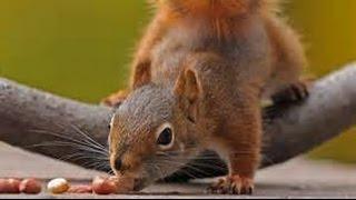 Get Rid Of Squirrels Using Verminators Squirrel Exit Tunnel