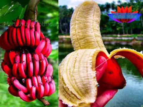 Health benefits of Red banana | Health tips in Tamil