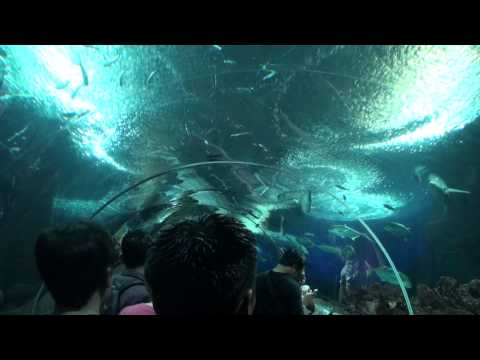 Singapore Zoo & Night Safari, Underwater World and Dolphin Lagoon Sentosa Island